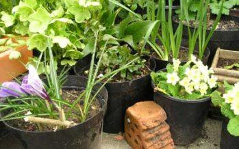 De ce e bine sa tineti plantele impreuna?