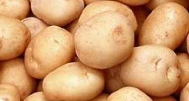 Cartoful (Solanum tuberosum)